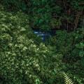 Forest Healing_sm